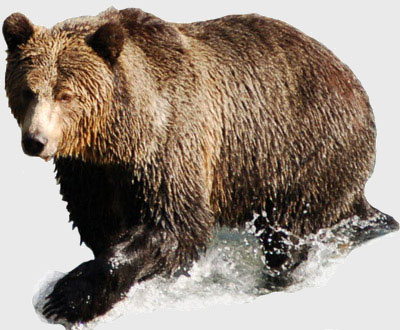 Shorting A Stock In Bear Market
